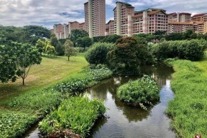 这里是新加坡最大最美的公园之一,它的前身竟然是排水沟、回收山和