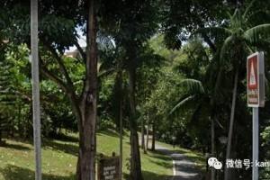 被野猪攻击血流不止,惊动了部长,新加坡的公园还安全吗