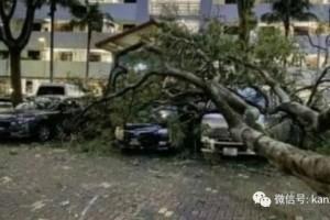 新加坡组屋楼下,6层楼高大树倒地,车辆挡风玻璃全碎