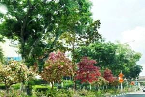 新加坡开启一系列绿化计划!!东海岸打造中央绿色长廊