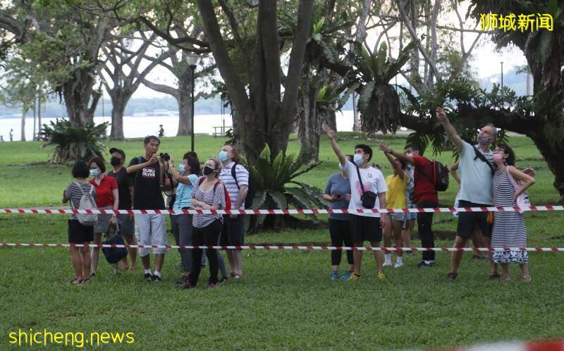 公园大树成猫头鹰家   公众聚集围观