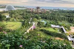 """新加坡是怎样一步步成为""""花园城市""""的"""