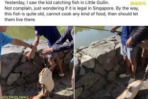 小桂林有一条巨大鲶鱼上钩,可能是某家人放养的宠物