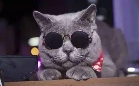 4000块新币买只猫!在新加坡养宠物这么贵吗