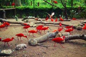 新加坡裕廊飞禽公园,这里才是亚洲最大的观鸟乐园,还能和鸟合影