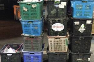 从大马非法进口蔬菜 新国蔬果贸易商被罚