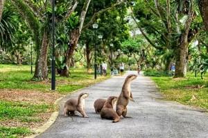 新加坡最好玩的海滩公园!赶海、骑马、划艇、树篱迷宫、烧烤露营,超适合家庭出游