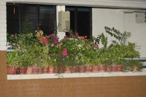 杀手垃圾的问题导致句容西的居民从走廊的窗台上取下盆栽植物