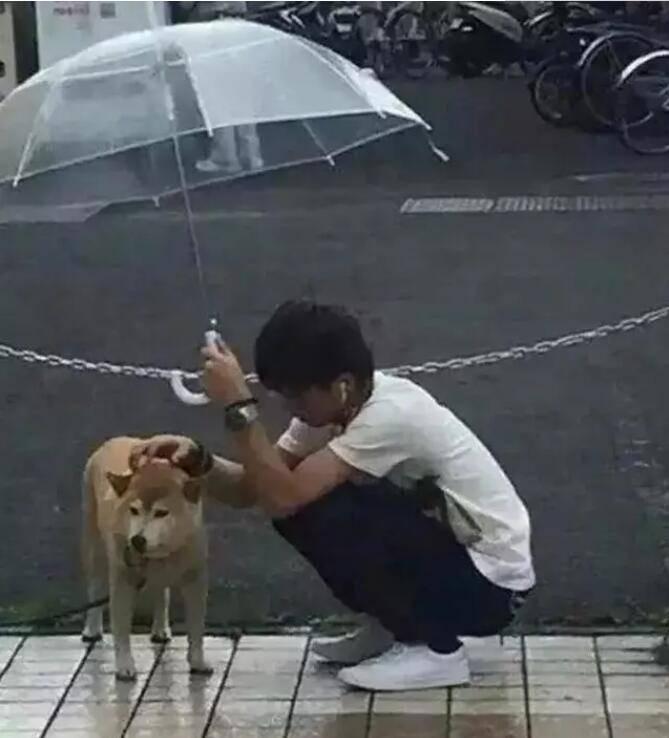 新加坡男子雨中为爱犬撑伞?这是什么狗操作