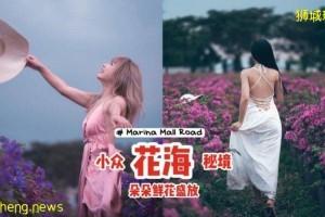 小众花海秘境Marina Mall Road📍鲜花朵朵盛放、自带美颜效果,拎上相机打卡去📷