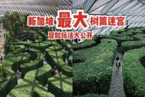 本地版爱丽丝梦境🧚🏻♀️Hedge Maze树篱迷宫冒险玩法大公开⚡暗藏惊喜,人过花开🌺
