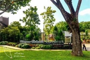 新加坡植物园扩建增加树木园!用高科技便可检测树木身体健康
