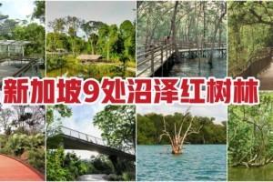 亲近大自然,好玩又免费!盘点新加坡9处沼泽红树林 · 珍稀野生鸟类 + 特有品种植物 + 漫步木质走道 · 简直就是大自然爱好者必打卡的圣地