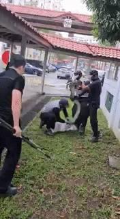 最近请注意周围,新加坡社区看到了至少4条蛇