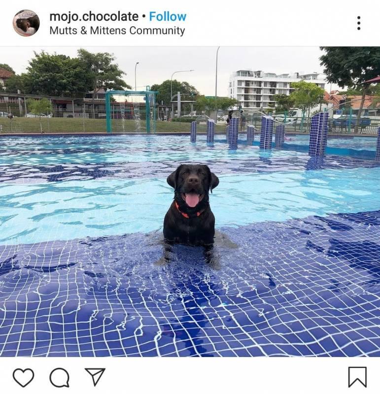 你们是不是想带着狗狗一起游泳无处可去,来这里吧