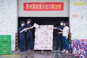"""惠州荔枝首次自主出口!23吨""""妃子笑""""运往新加坡"""