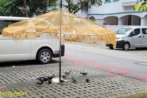 居民喂食成鸟患  当局出奇招捕鸽