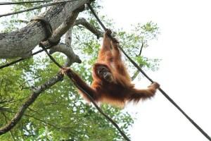新加坡的另一种玩法,花一天时间寻找这里的各种野生动物