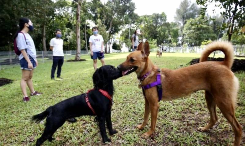 新加坡最大遛狗场开幕,快带上狗狗来溜溜吧