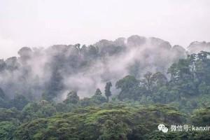 人间仙境!雾气掩盖163.63米的武吉知马山,好梦幻