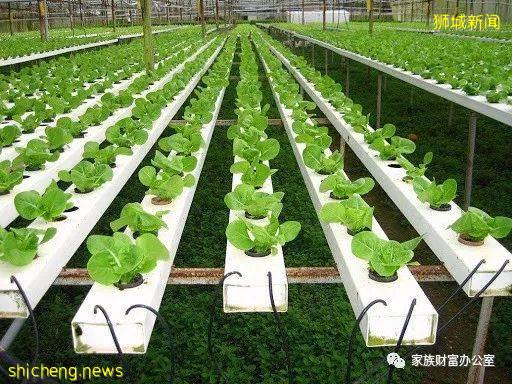 新加坡企发局为农业和水产养殖业注资 培养本地相关企业的创新技能